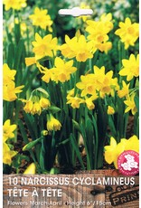 Hollands geteeld Narcis cyclamineus Tete á Tete