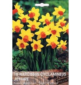 Hollands geteeld Narcis Jetfire