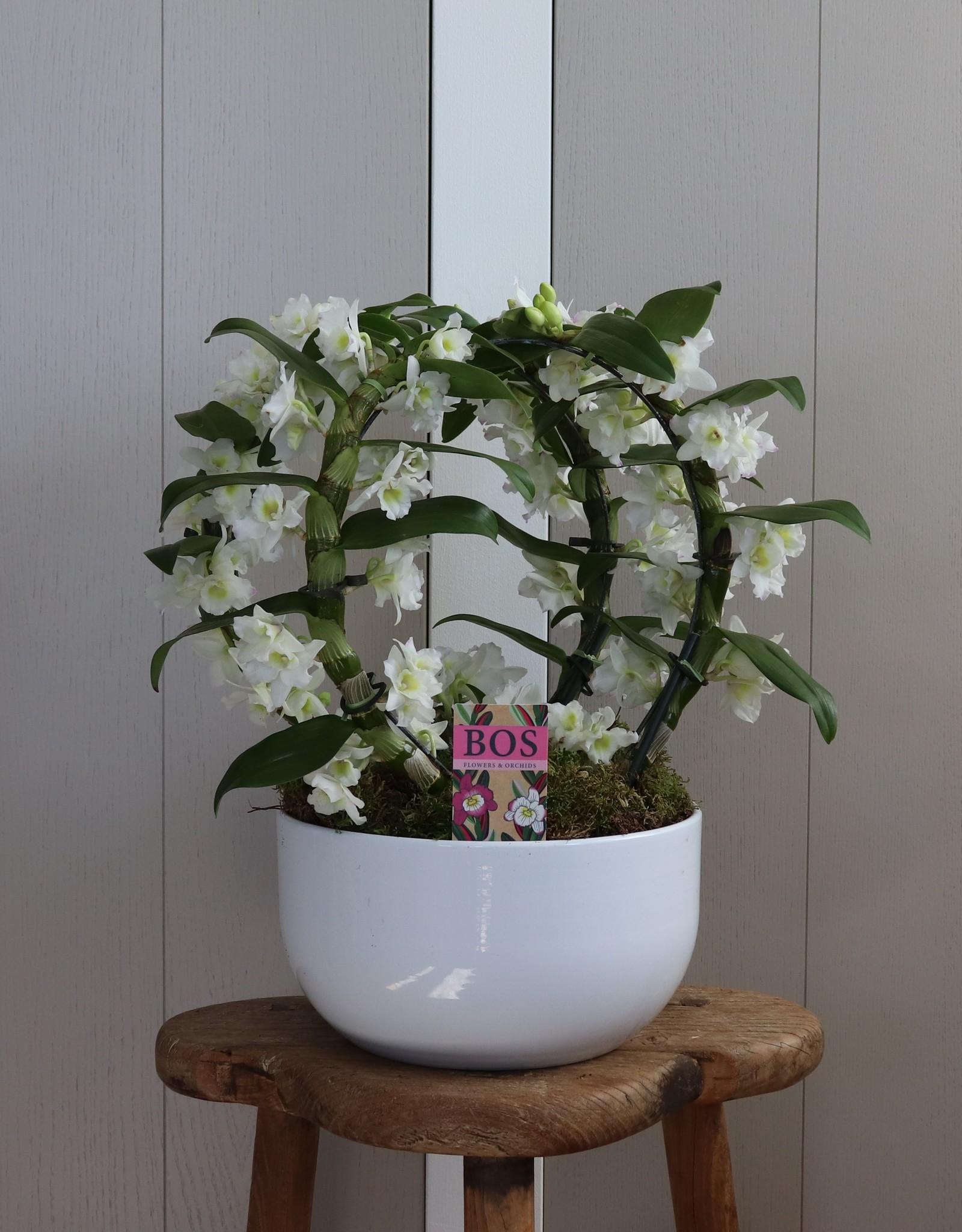 Arrangement Dendrobium Nobilé Dubbele Boog | Apollon