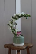 Dendrobium Nobilé Boomerang   Apollon