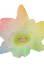 Dendrobium Nobilé   regenboog 2-tak