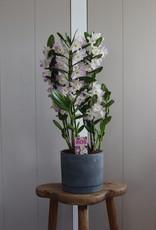 Arrangement Dendrobium Nobilé | Kumiko