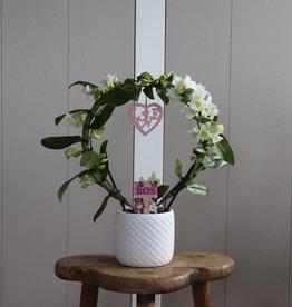 Dendrobium Nobilé Boog | HEART | wit