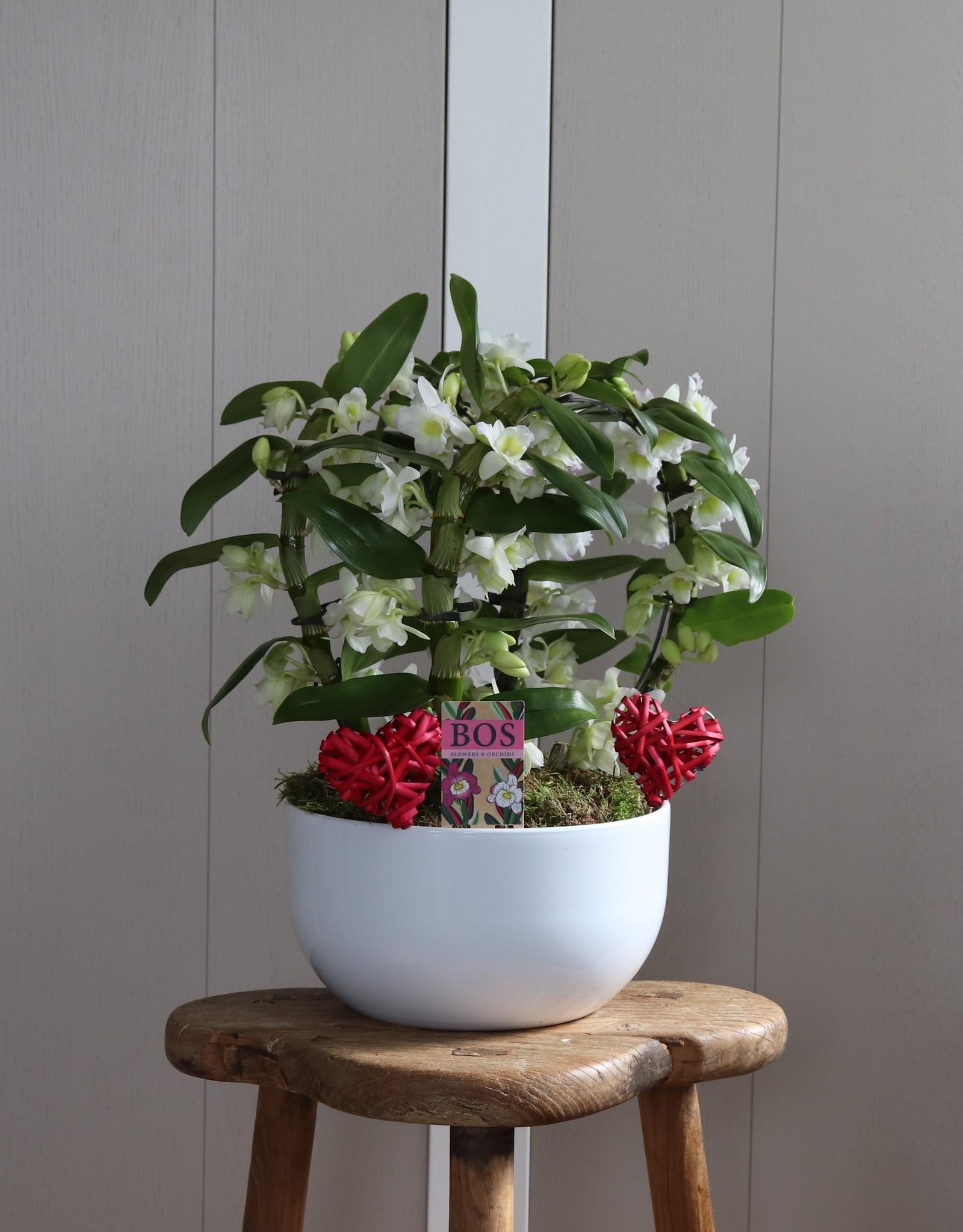 Arrangement Dendrobium Nobilé Dubbele Boog  | Apollon | HEART
