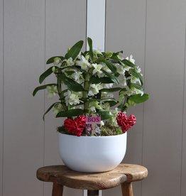 Arrangement Dendrobium Nobilé Dubbele boog | HEART | wit