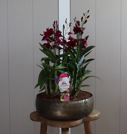 Arrangement Dendrobium Sanook | paars