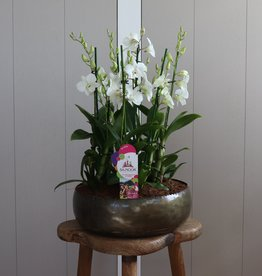Arrangement Dendrobium Sanook | wit