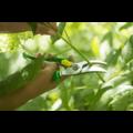 Snoeischaar, Opinel Garden, rvs/hout, groen, 3 standen, LeSecateur