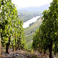 Kwaliteitswijnen uit de Duitse Moezel