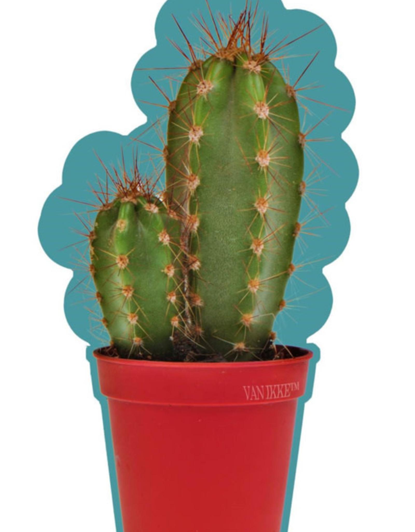 Van Ikke Van Ikke - Cactus