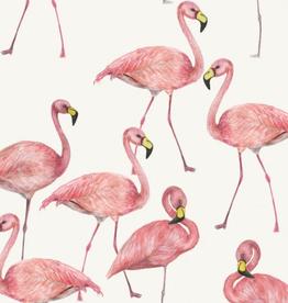 Tricot - Flamingos