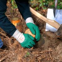 thumb-Handschoenen, forest-3