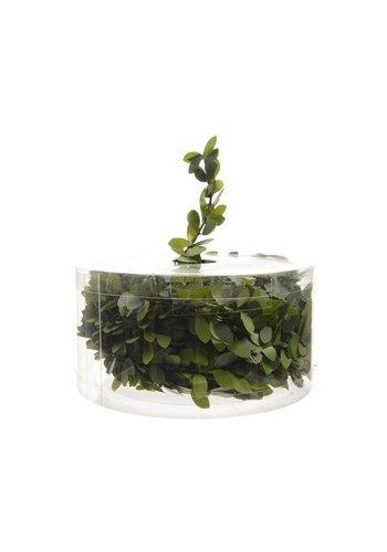 Decoris Spiraal groene buxusbladeren dia1.5x750cm