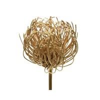 Cleome spinosa 42cm goud op steel