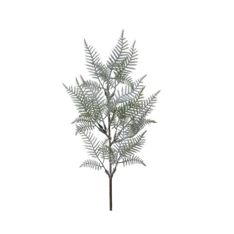 Tak asparagus frost, 52cm, 13 tips-1