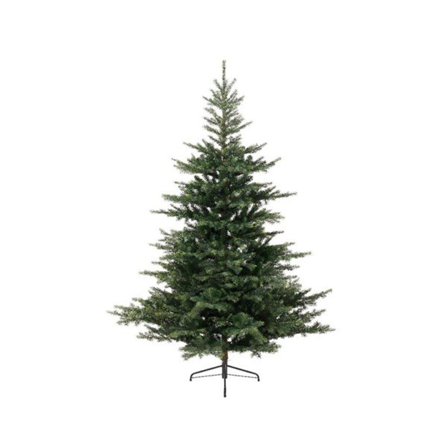 Kerstboom Grandis fir 240cm-1