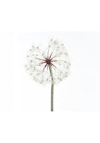 Decoris Paardenbloem plastic, 90cm, wit