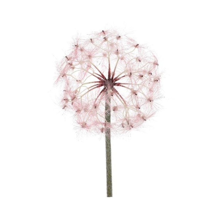 Paardenbloem plastic, 90cm, roze-1