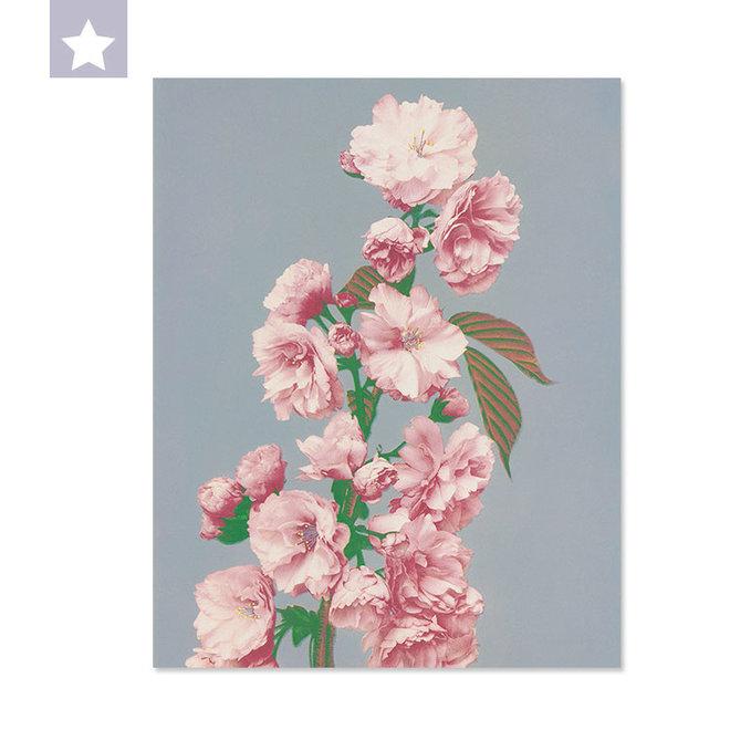 Cherry blossom 25 x 31,5 cm