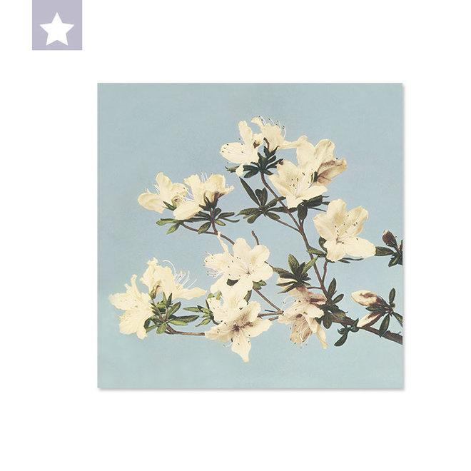Japanse Azalea 25 x 25cm