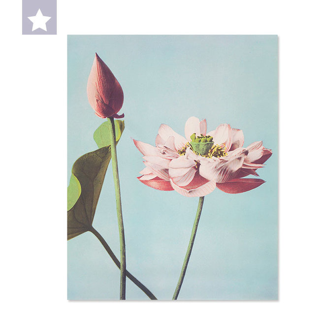Lotus flower 25 x 31,5 cm