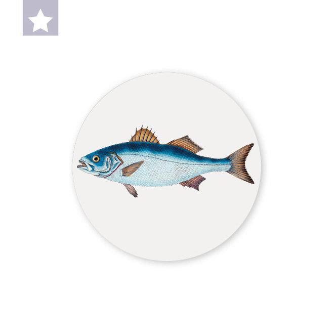 Sea Bass | dibond wall plate 15x15cm
