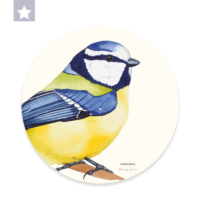Wall circle  blue tit