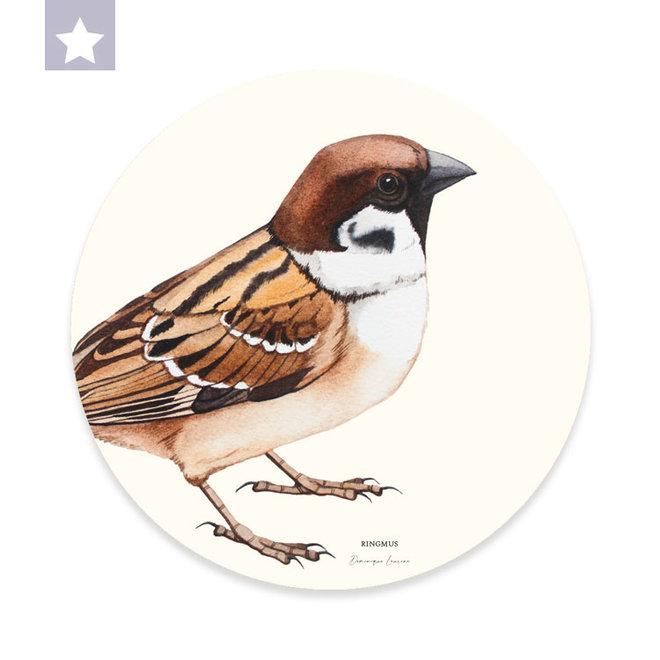 Wall circle ring sparrow