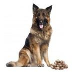 Diepvries hond