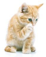 Sjaans Dierenparadijs ------alles voor uw huisdier.---------