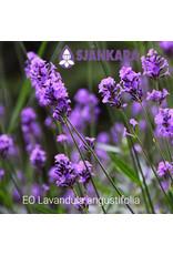 Sjankara Sjankara - etherische olie echte lavendel (Lavandula angustifolia)