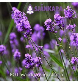 Sjankara EO echte lavendel