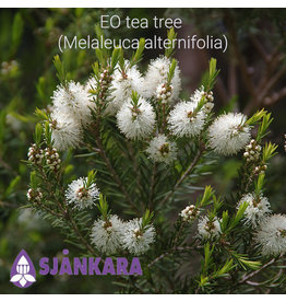 Sjankara EO tea tree