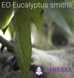 Sjankara EO Eucalyptus smithii