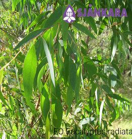 Sjankara EO Eucalyptus radiata