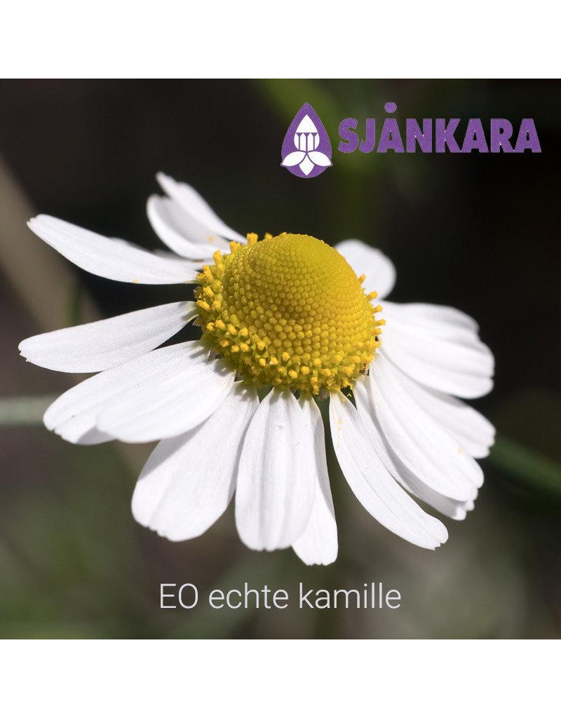 Sjankara Sjankara - etherische olie echte kamille (Matricaria recutita)