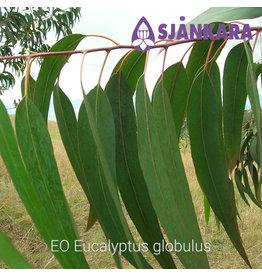 Sjankara EO Eucalyptus globulus
