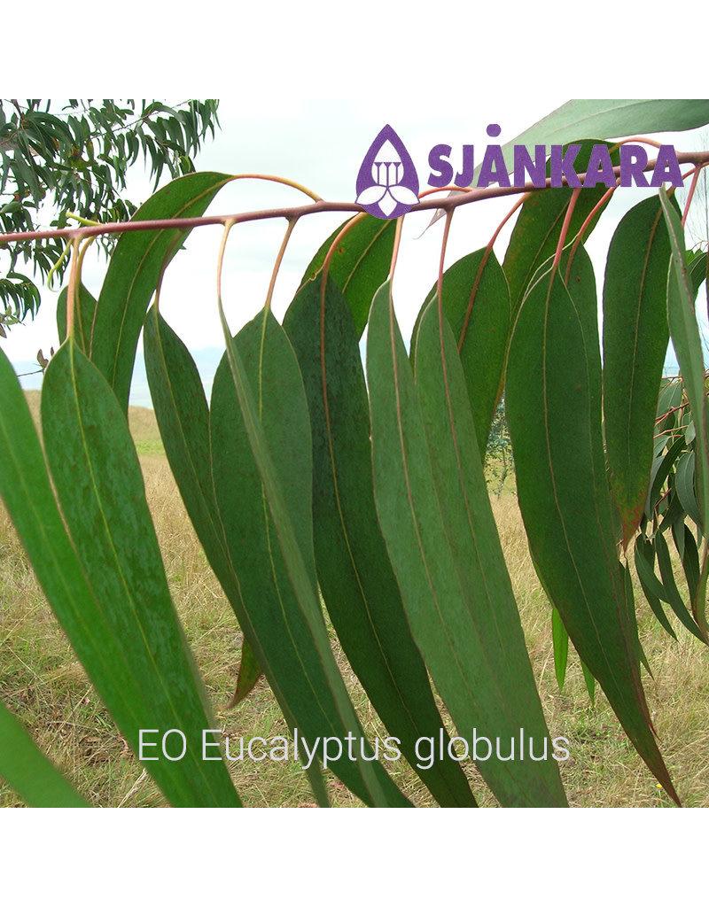 Sjankara Sjankara - etherische olie Eucalyptus globulus