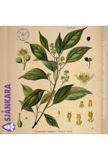 Sjankara Sjankara - etherische olie ravintsara (Cinnamomum camphora var. Ravintsara)