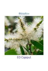 Oshadhi Oshadhi - etherische olie cajeput (Melaleuca leucadendron)