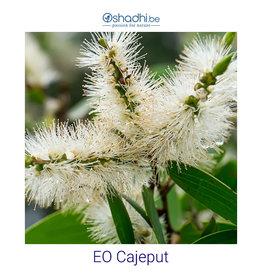 Oshadhi EO cajeput (Melaleuca leucadendron)
