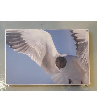 SURFART Photo on wood - seagull
