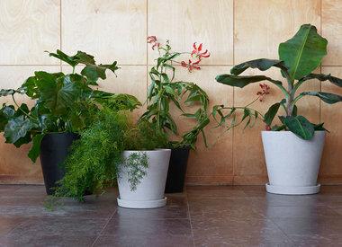 Planten-/tuinartikelen