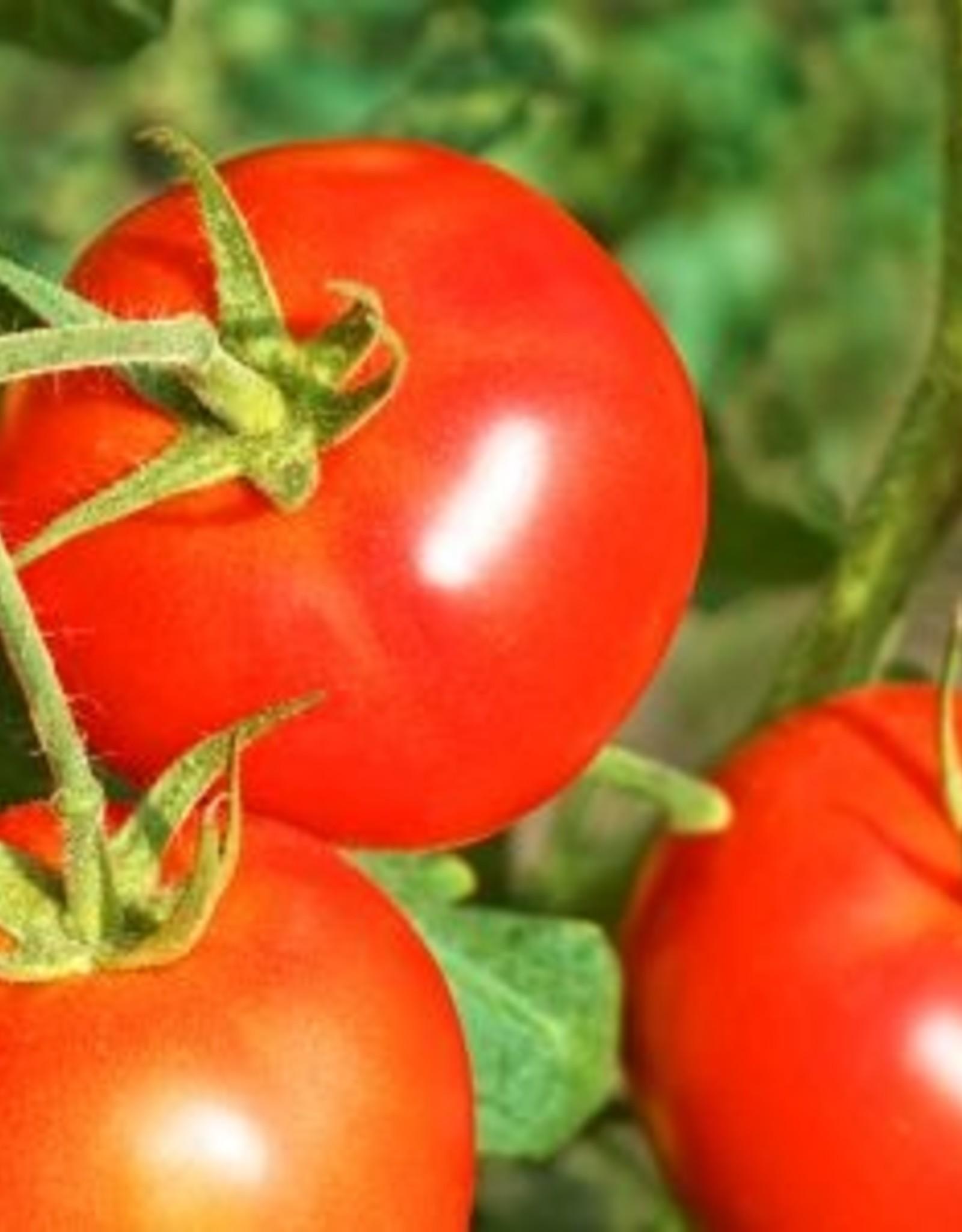 Tasty tom tomatensoep (vegetarisch) met bosui en honingtomaatjes