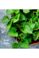 Brennessel Seife Naturseife auf Olivenölbasis, plastikfrei