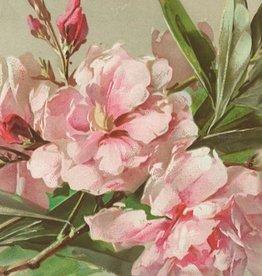 Geurzakje Oleander