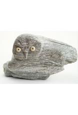 Kangiqsujjuaq Owl & Young