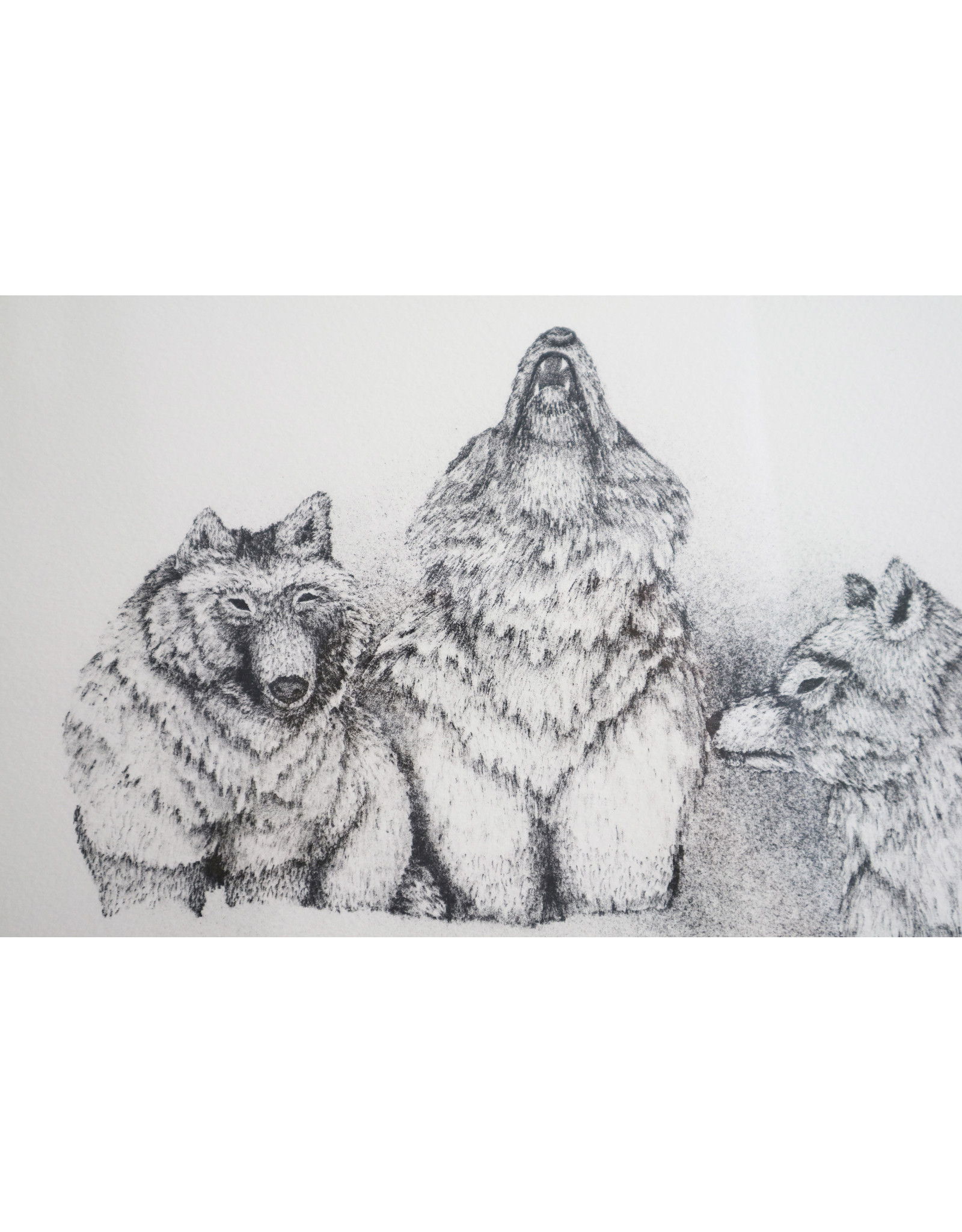 Holman Wolves and Caribou