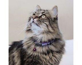 Kattenhalsbandje