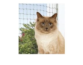 Veiligheidsnetten voor katten